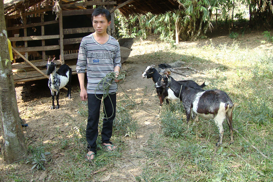 Breeding goats is a great source of income and improves a family's nutrition