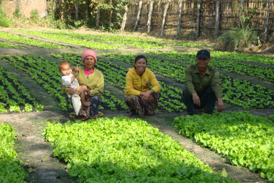 Farmers' Clubs participants in their vegetable field
