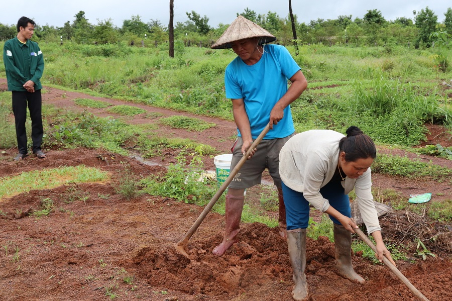 Farmers are establishing demonstration plots, one per FC, to trial new climate-smart methods and produce