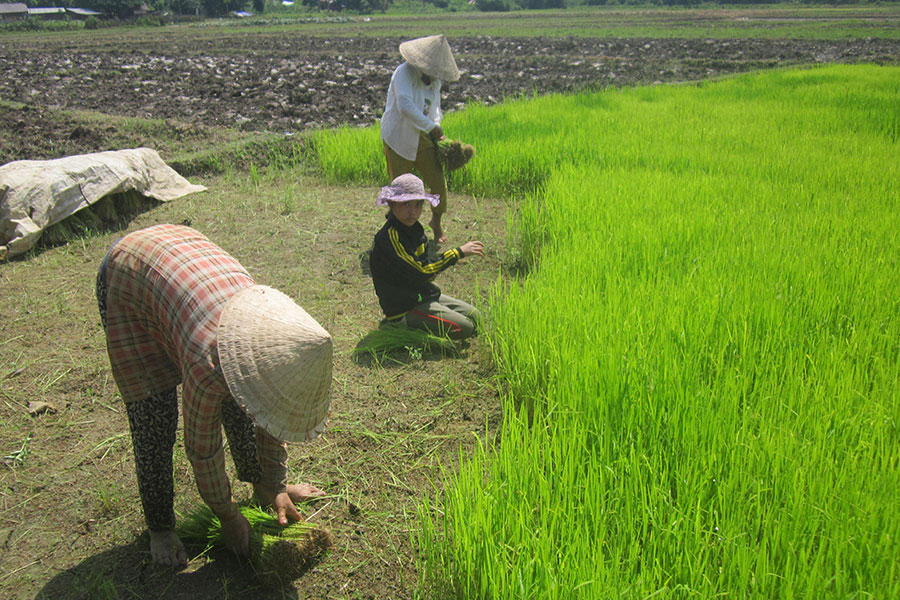 Sustainable agriculture is one of HPP Laos' main areas of focus