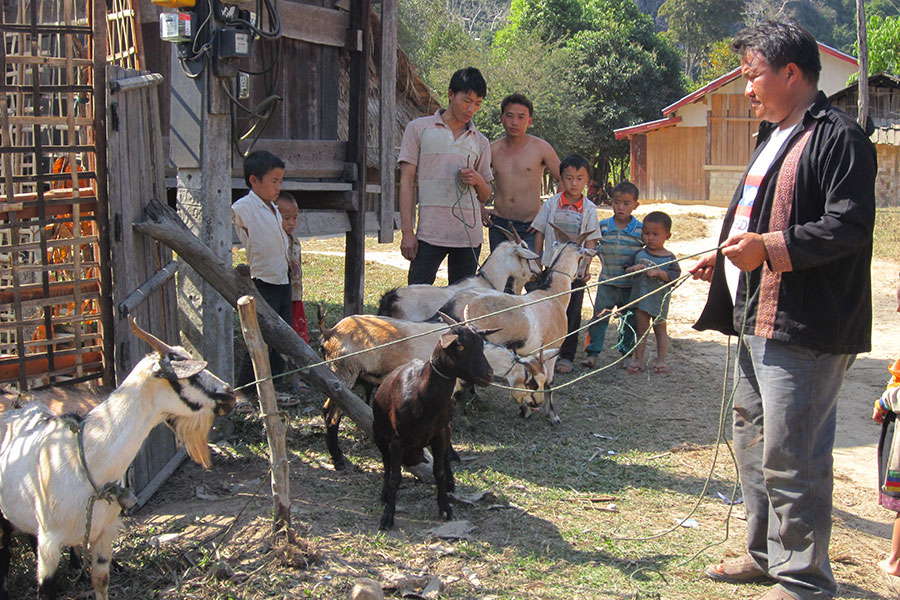 Every participating family received female goats, and some families an additional male goat