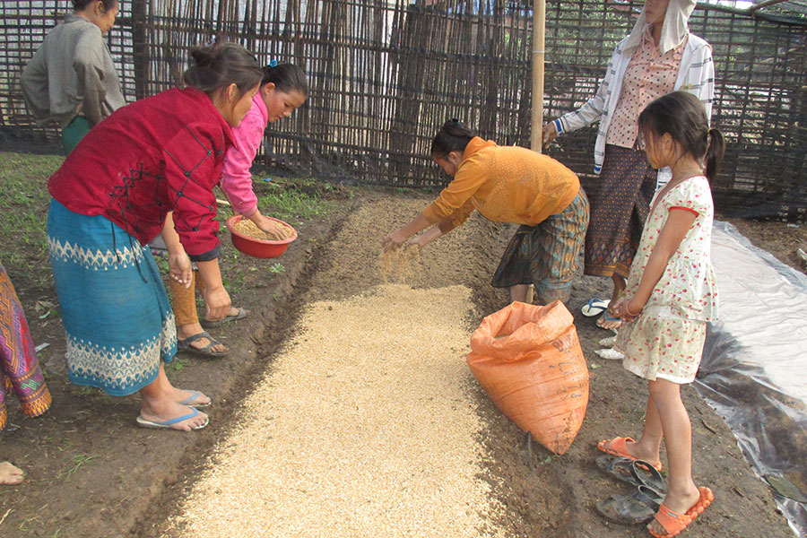 Women farmers establishing a rattan nursery